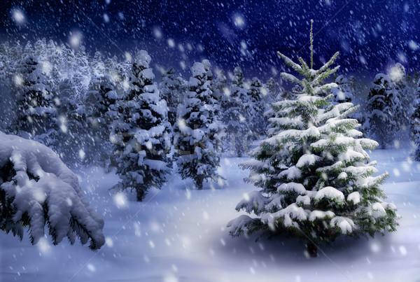 Fir tree in snowy night Stock photo © Smileus
