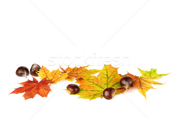 Arranged fallen down leaves and chestnuts on white Stock photo © Smileus