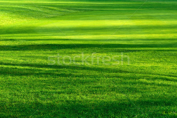Light and shadows on a beautiful lawn Stock photo © Smileus
