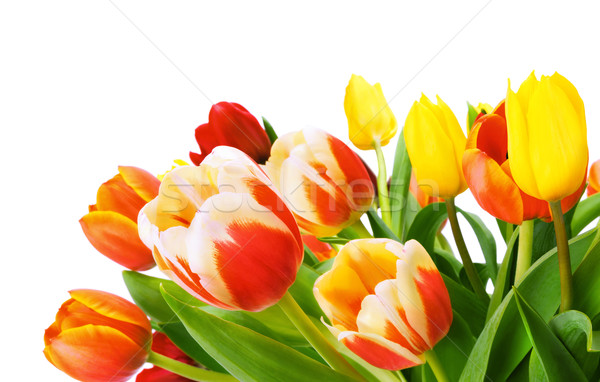 Stock photo: Bouquet of tulips isolated on white