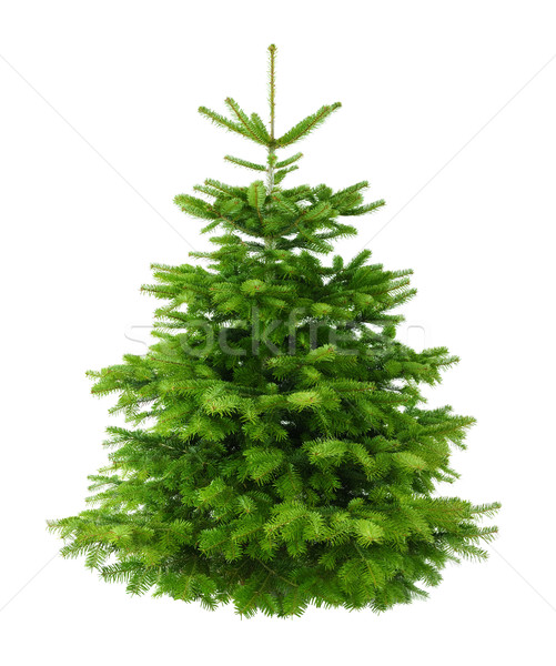 Stock photo: Perfect lush Christmas tree without ornaments
