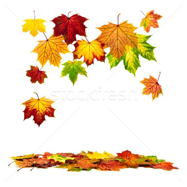 カラフル 紅葉 下がり ダウン 白 ストックフォト © Smileus
