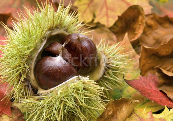 Taze sonbahar yaprakları açmak kuru ağaç gıda Stok fotoğraf © Smileus
