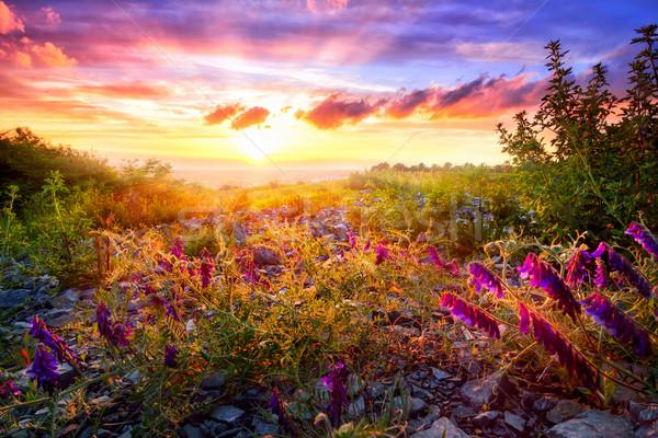 закат пейзаж живописный смешанный растительность Сток-фото © Smileus