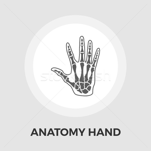 Anatomy hand Vector Flat Icon Stock photo © smoki