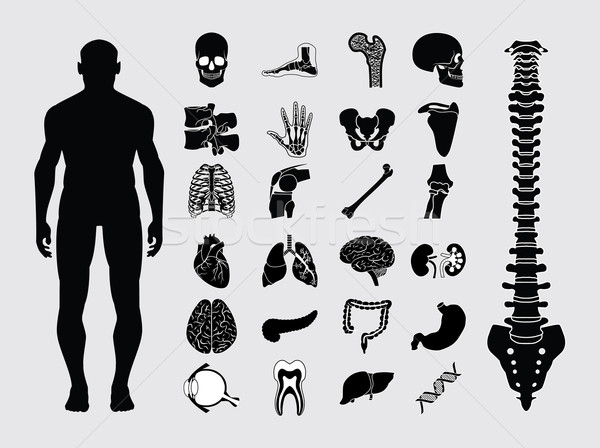 Human anatomy icons Stock photo © smoki