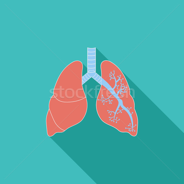 Lungs in Black and White Stock photo © smoki