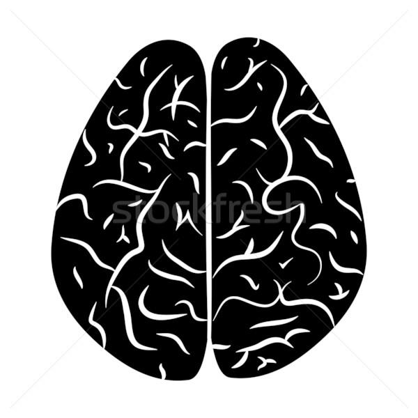 Hersenen eps lichaam gezondheid geneeskunde Stockfoto © smoki