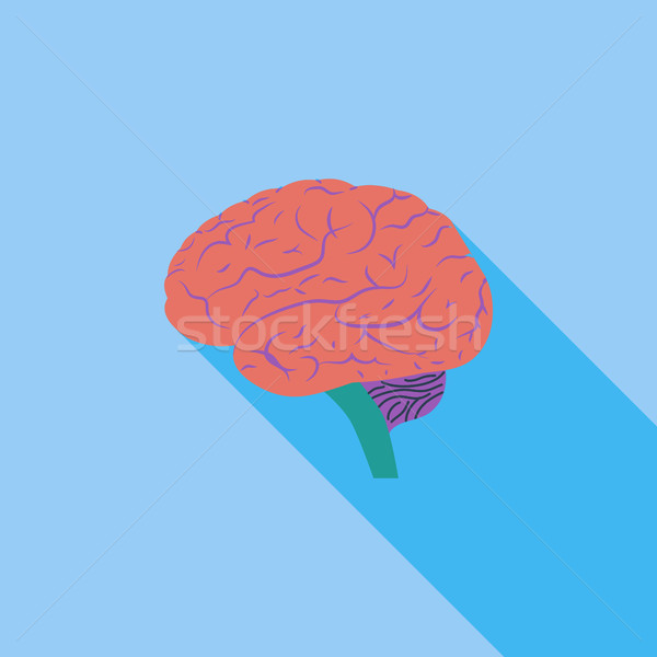 Brain. Stock photo © smoki