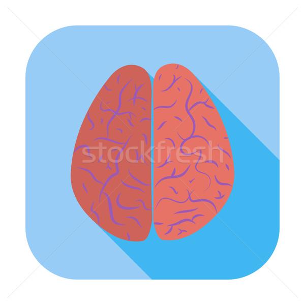 Hersenen kleur icon lichaam ontwerp Stockfoto © smoki
