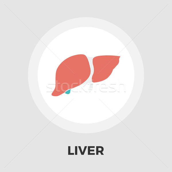 Liver flat icon Stock photo © smoki