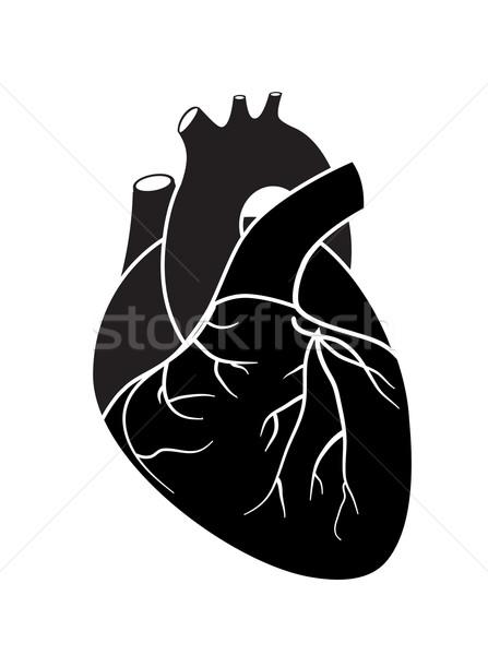 Heart Stock photo © smoki