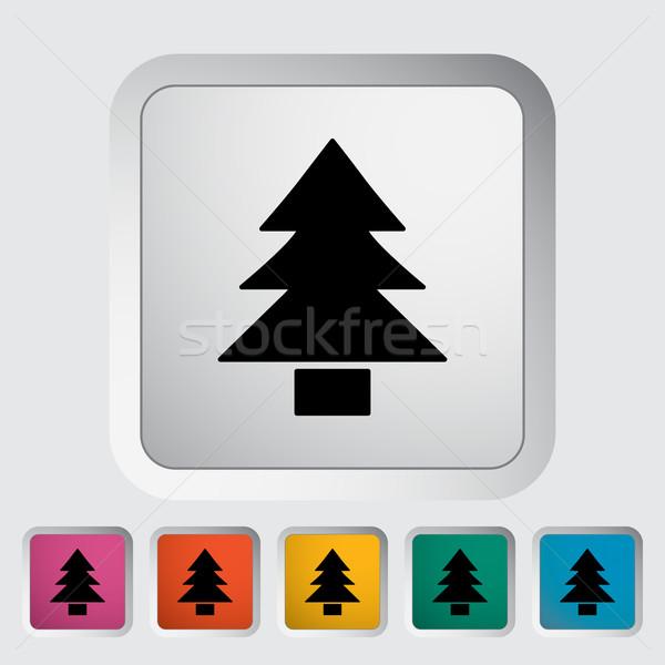 Conifer Stock photo © smoki