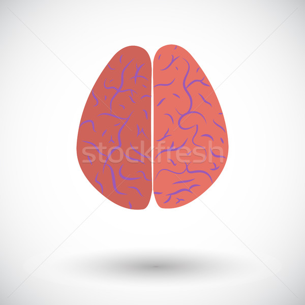 Human brain Stock photo © smoki