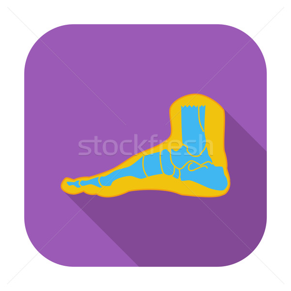 Foot anatomy icon. Stock photo © smoki