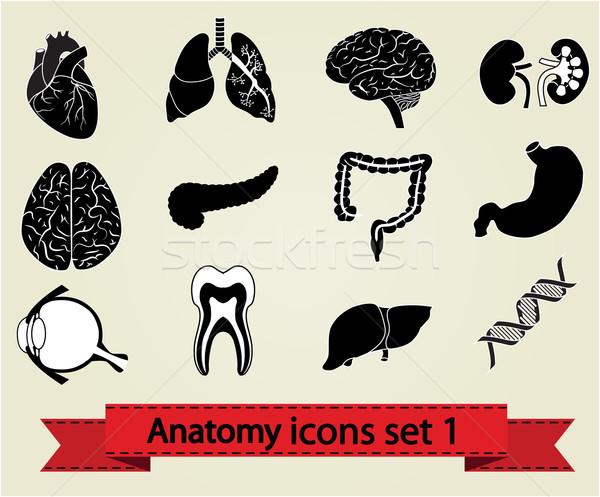 Stok fotoğraf: Anatomi · insan · anatomisi · simgeler · beyin