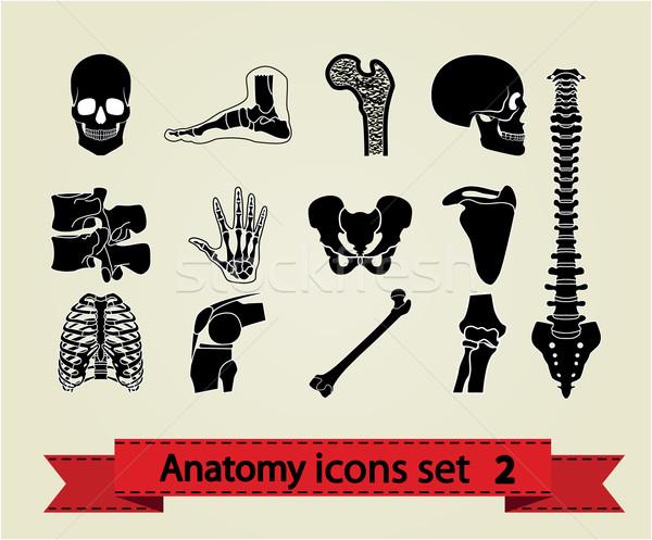 Anatomia anatomia humana ícones eps Foto stock © smoki