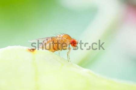 Meyve uçmak yeni doğmuş stüdyo Stok fotoğraf © smuay