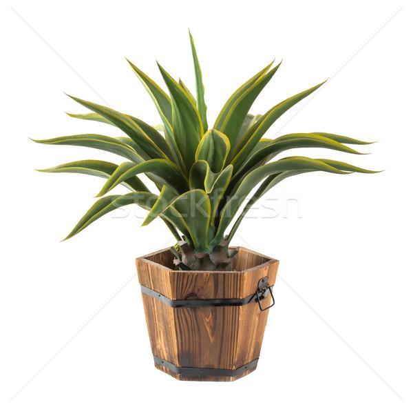 Agave madeira balde artificial planta Foto stock © smuay