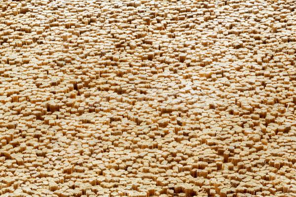 Seção transversal incenso textura árvore madeira Foto stock © smuay