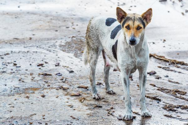 Koszos kutya női nedves beton padló Stock fotó © smuay