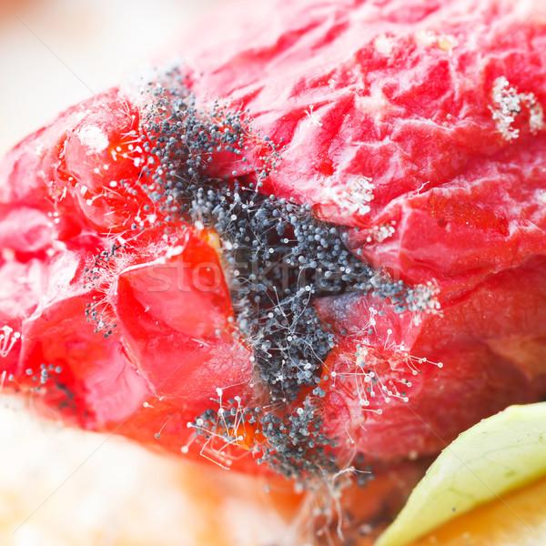 Penész gomba növekvő közelkép rohadt borostyán Stock fotó © smuay
