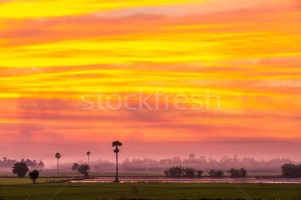 Tan Tayland gıda çim gün batımı Stok fotoğraf © smuay