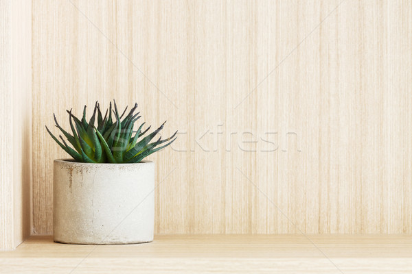 Artificial succulent plant Stock photo © smuay
