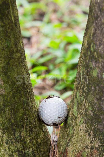 ゴルフボール 2 ヤシの木 汚い ストックフォト © smuay