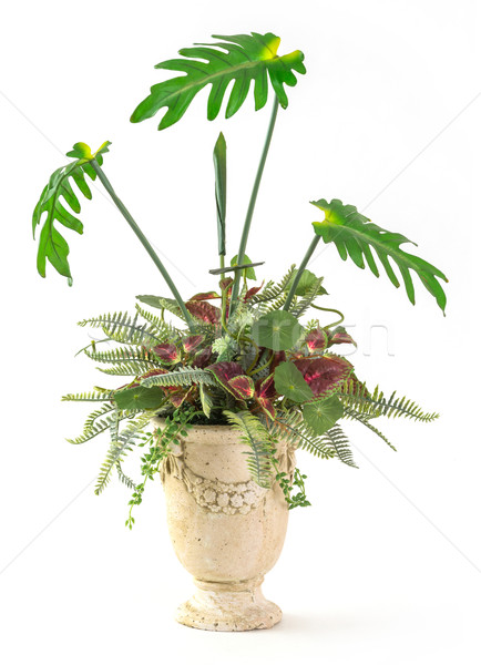 Plant decoration in clay pot Stock photo © smuay
