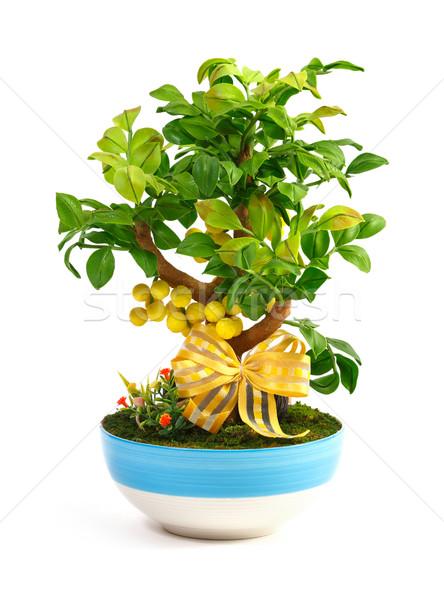 árvore frutífera flor artificial imitação cerâmico Foto stock © smuay