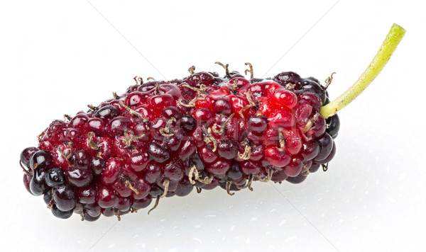 Thai Mulberry Stock photo © smuay