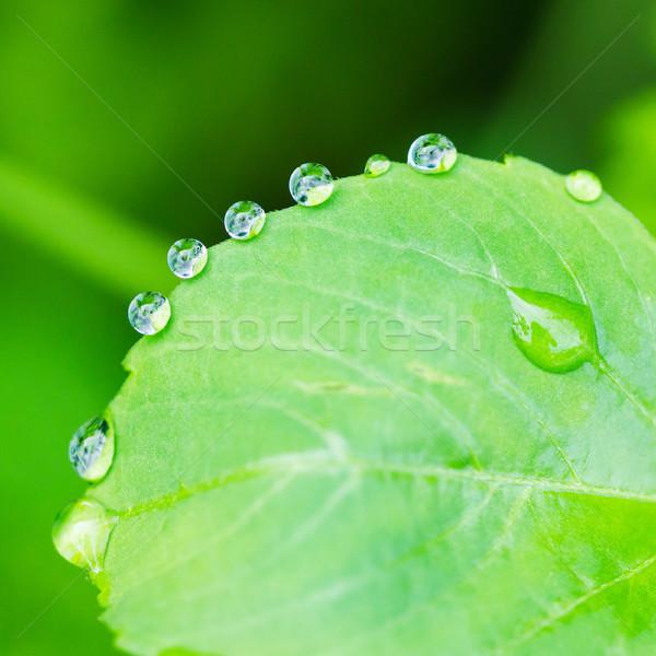 çiy yeşil yaprak su damlacık tazelik doğa Stok fotoğraf © smuay