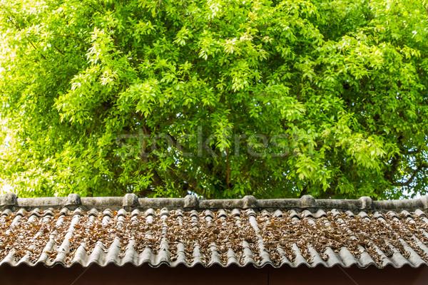 Drogen blad dak top groen blad gebouw Stockfoto © smuay