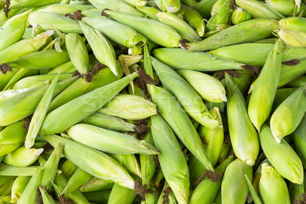 Thai sweet corn Stock photo © smuay