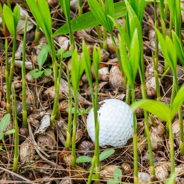 ゴルフボール 汚い 手のひら 苗 ストックフォト © smuay