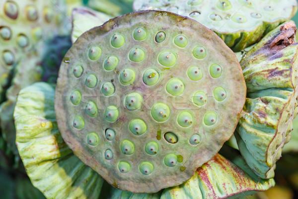 蓮 シード ポッド 新鮮な 販売 市場 ストックフォト © smuay