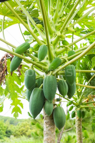 Fa közelkép zöld szín kert étel Stock fotó © smuay