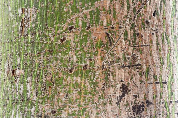 árvore casca textura madeira padrão Foto stock © smuay