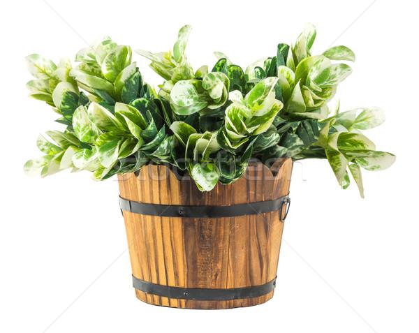 Photo stock: Artificielle · vert · bois · seau · isolé