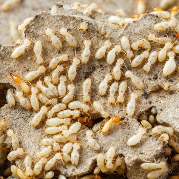 Bianco formiche distrutto carta texture Foto d'archivio © smuay