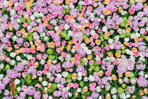 Flor colorido aumentó clavel flores Foto stock © smuay