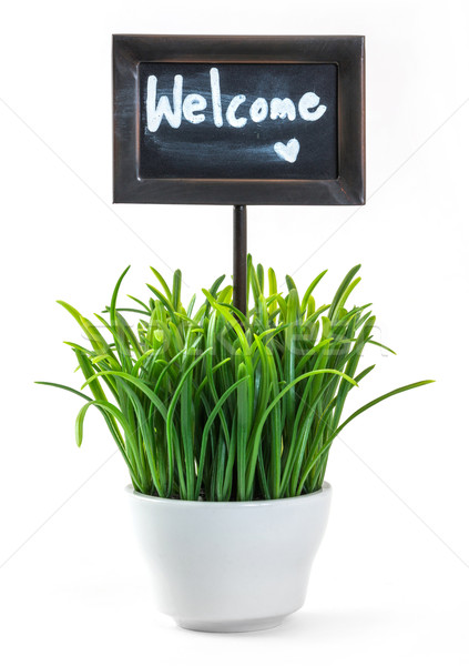 Stock photo: Welcome sign and grass in ceramic pot