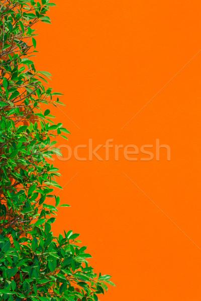Levél fal zöld levél narancs szín textúra Stock fotó © smuay