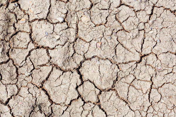 Dried and cracked soil  Stock photo © smuay