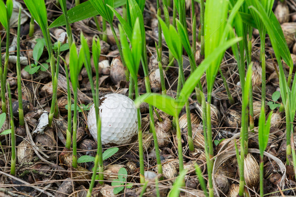 Stock photo: Golf ball stuck in palm seedlings