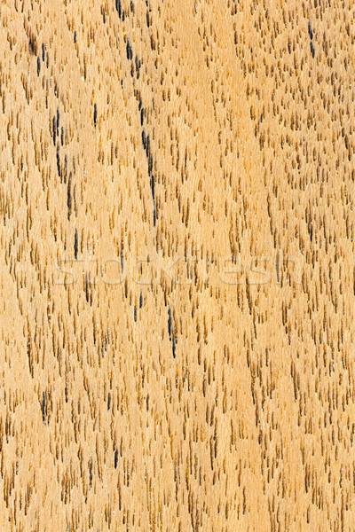 eak wood texture Stock photo © smuay