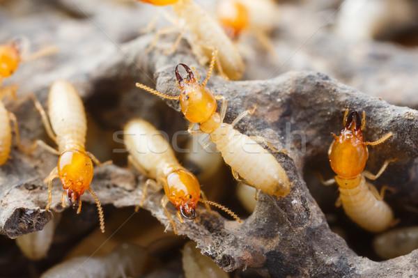 Biały mrówki zniszczony papieru tekstury Zdjęcia stock © smuay