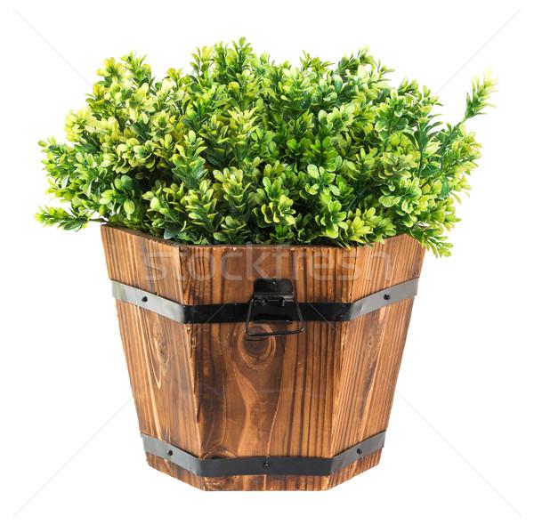 зеленый древесины ковша изолированный белый цветок Сток-фото © smuay