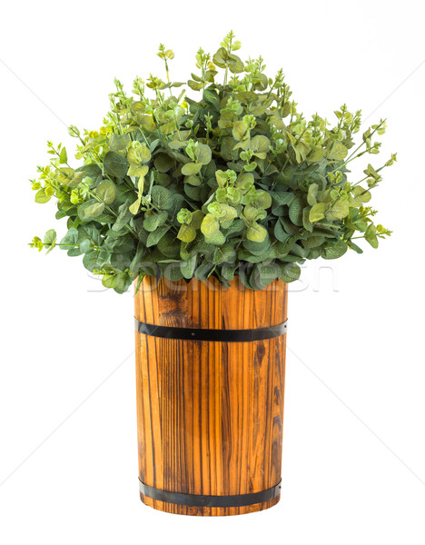 Stock photo: Bunch of eucalyptus leaf